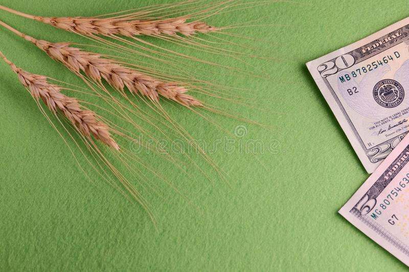 Grain and money. Three wheat heads and twenty-five dollars a united states. Concept corruption in the field of agriculture, purcha royalty free stock photography