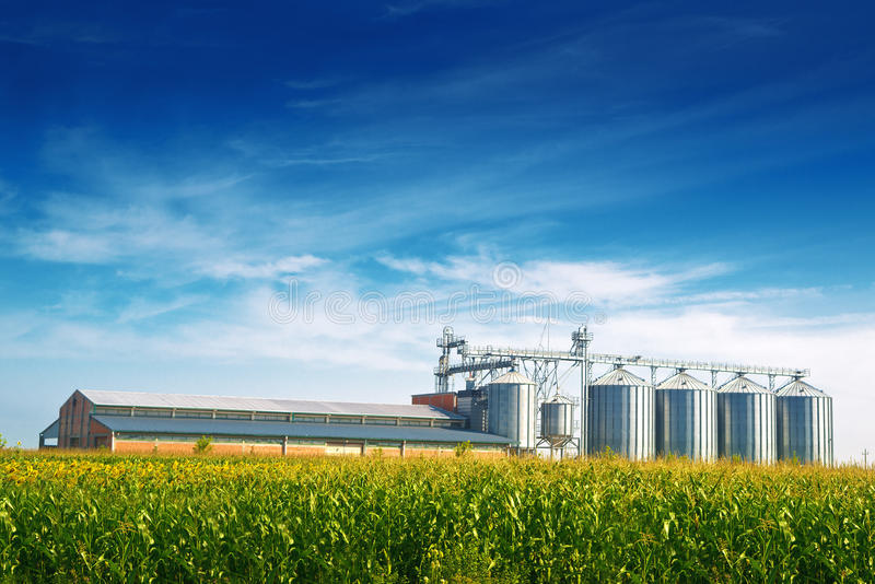 Grain Silos in Corn Field stock images