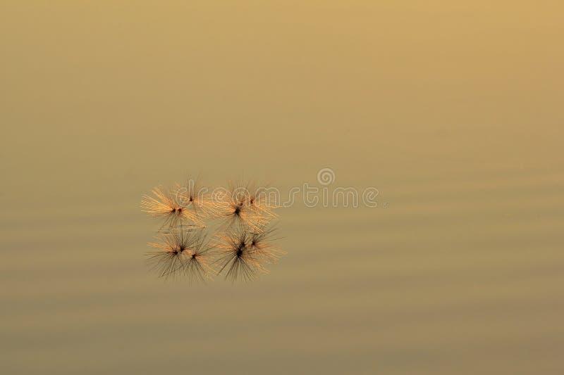 Graine d'or - couleurs à l'arrière-plan de nature - simpliste et minimalisme en nature image libre de droits