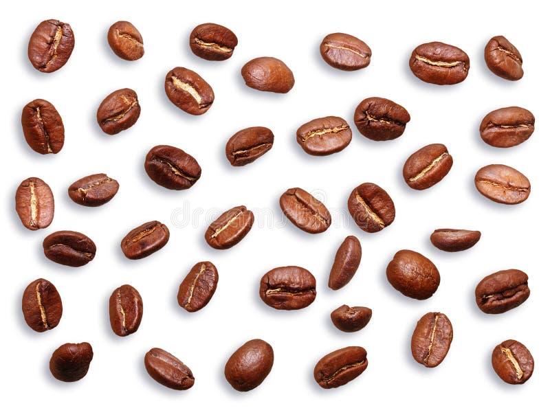Graine de caf? noire, haricot images libres de droits