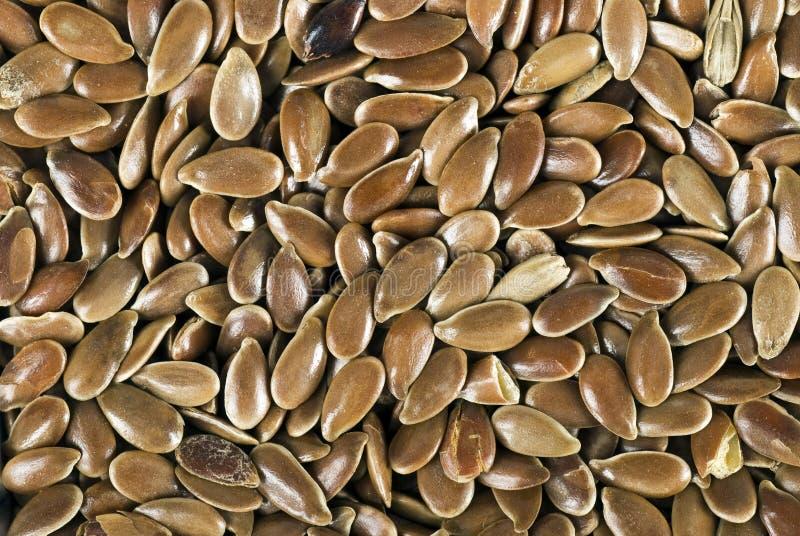 Download Graine de lin de Brown photo stock. Image du flaxseed - 8663784