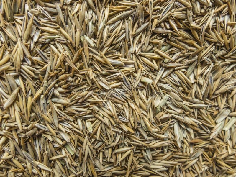 Graine de pelouse images stock