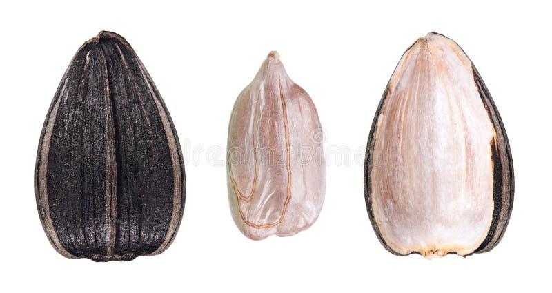 Graine de tournesol noire image stock
