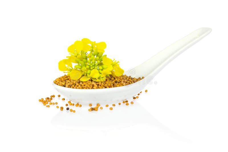 Graine et fleur de moutarde dans la cuillère de porcelaine photos stock