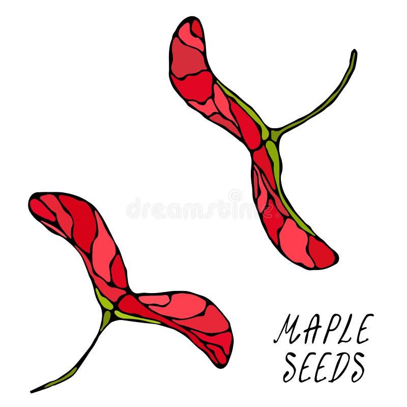 Graines d'érable rouge Automne ou collection de récolte d'automne Illustration de haute qualité tirée par la main réaliste de vec illustration de vecteur