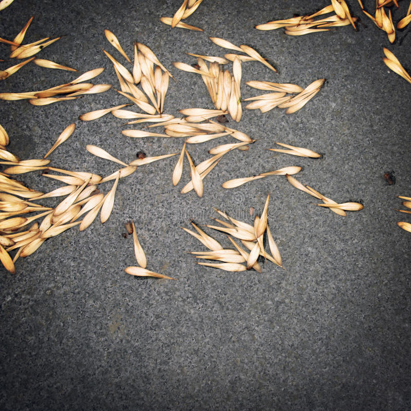 Graines d'arbre sur la voie humide de granit Photo âgée images libres de droits