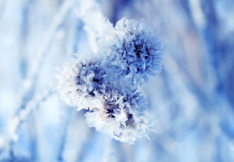 Graines d'usine de bardane couvertes de cristaux blancs de gel en hiver photo stock