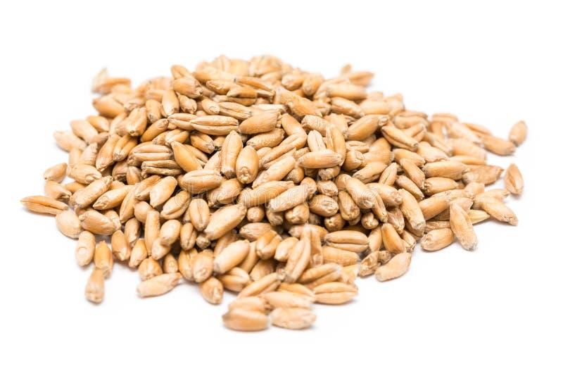 Graines de blé images stock