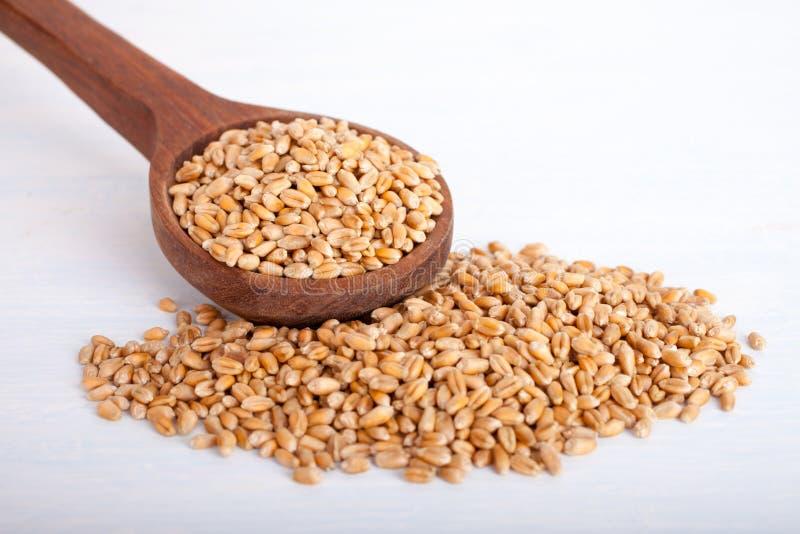 Graines de blé dans la grande cuillère en bois sur le fond blanc, vue de perspective image stock