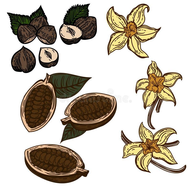 Graines de cacao, vanille, noisettes d'isolement sur le blanc illustration de vecteur