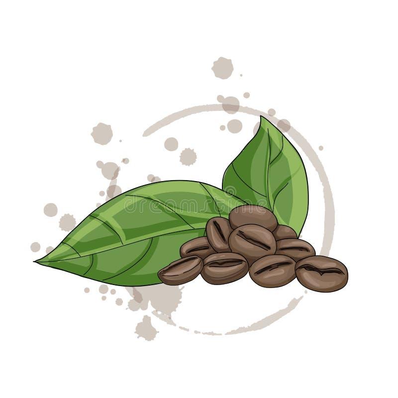 Graines de café de vecteur d'isolement sur un fond blanc illustration de vecteur