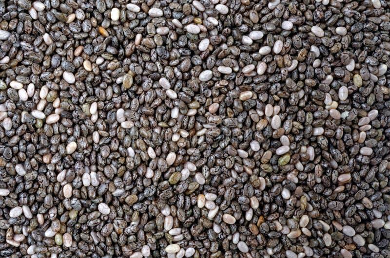 Graines de Chia photos stock