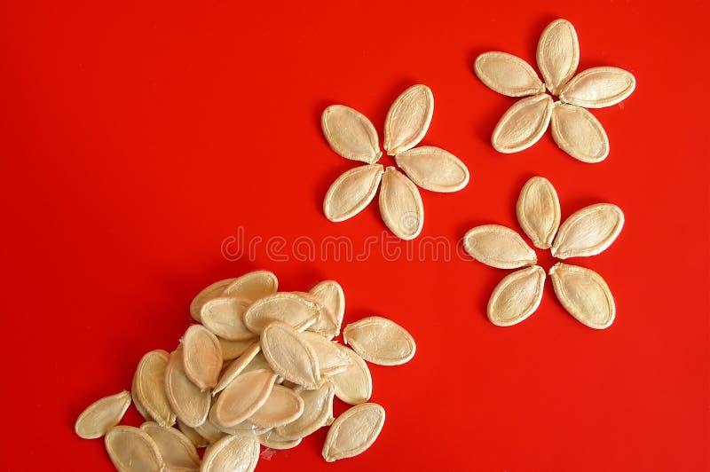 Graines de citrouille image stock