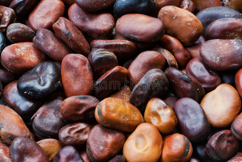 Graines de fève image stock