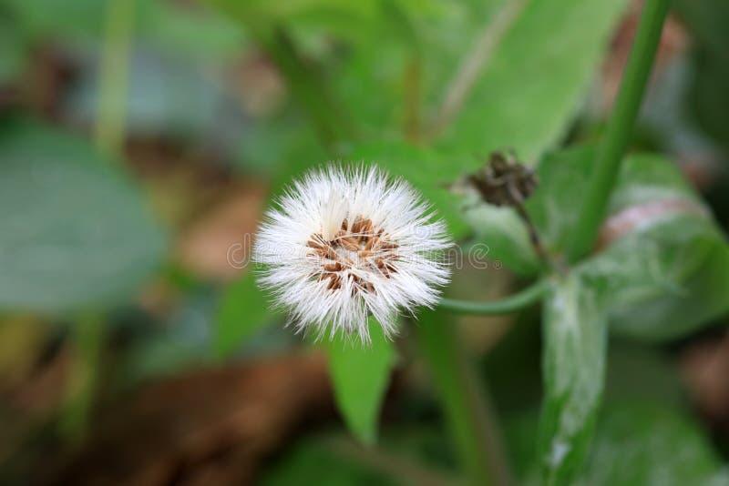 Graines de fleur photographie stock libre de droits