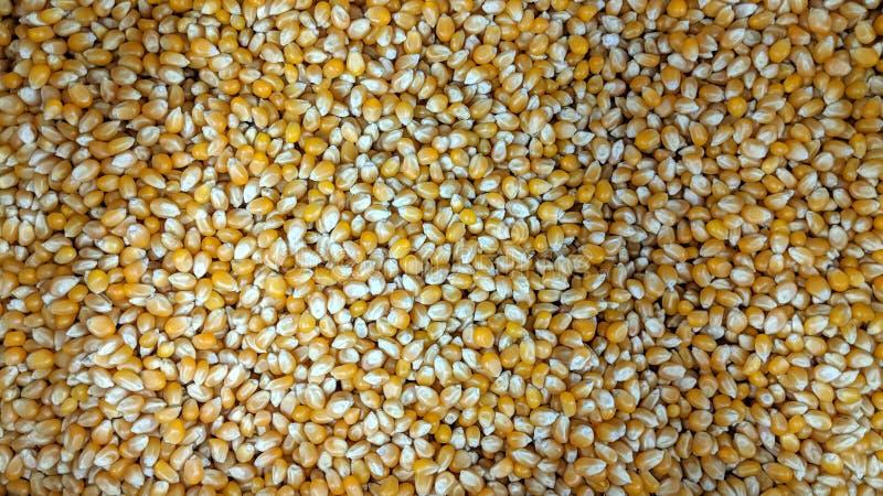 Graines de grains dans lâche illustration libre de droits