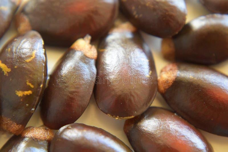 Graines de Guyabano image stock