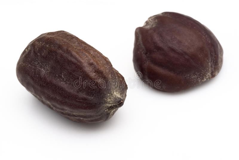 Graines de jojoba (Simmondsia chinensis) images stock
