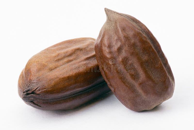 Graines de jojoba (Simmondsia chinensis) photo stock