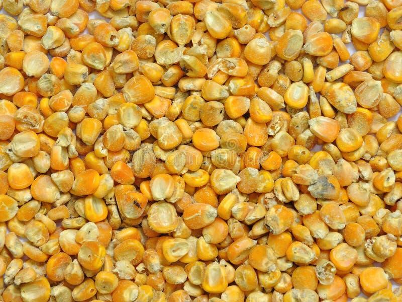Graines de maïs pour l'alimentation des animaux photos stock