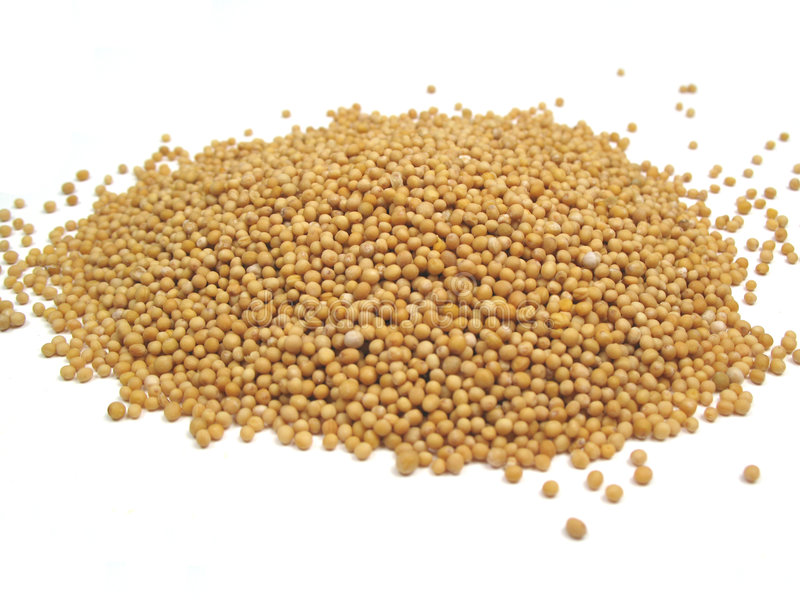 Graines de moutarde image stock