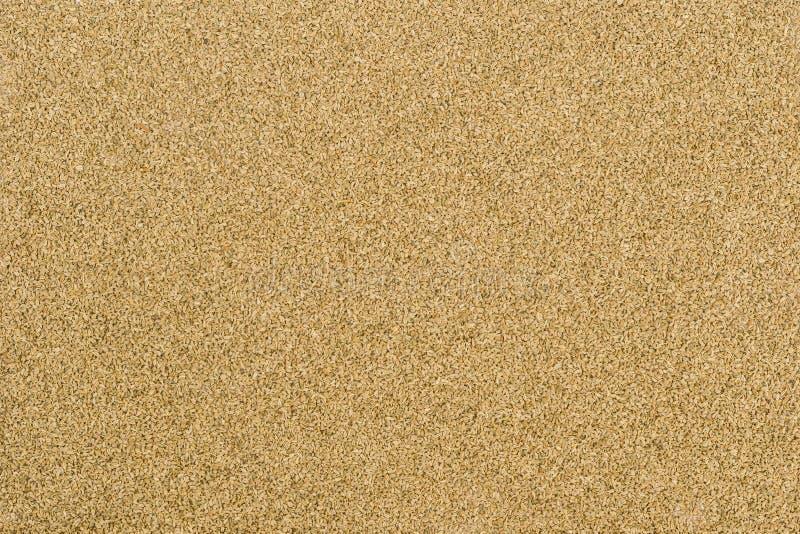 Graines de Thymol (ajwain) photos libres de droits