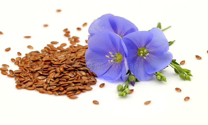 Graines et fleurs de lin textile image libre de droits