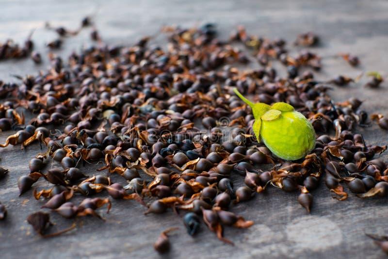 Graines fraîches d'Agarwood images libres de droits