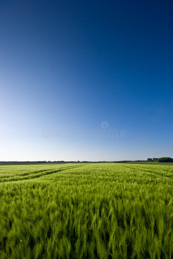 Download Grainfield and a blue Sky stock image. Image of countryside - 14599425