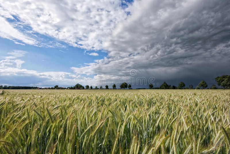 Download Grainfield and storm stock image. Image of field, disturbance - 25377711