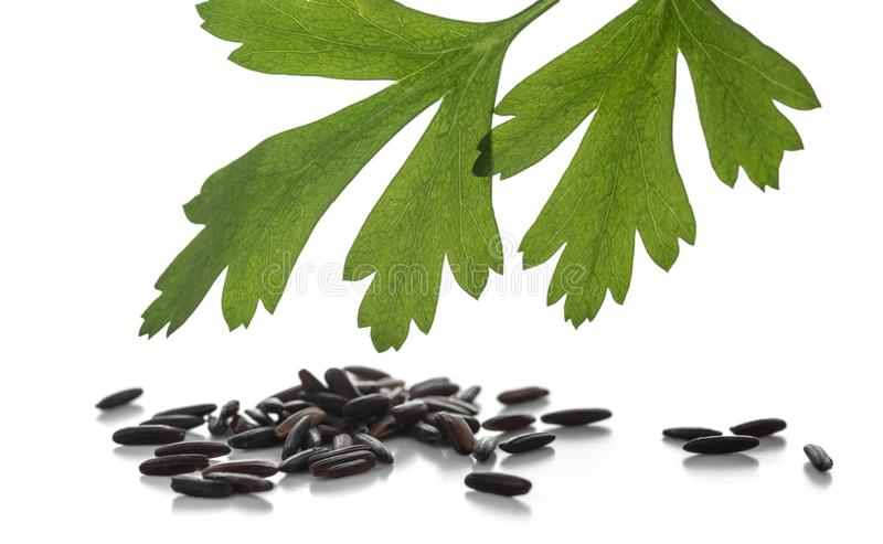 Grains of black rice with a sprig of parsley isolated on white background. royalty free stock photo