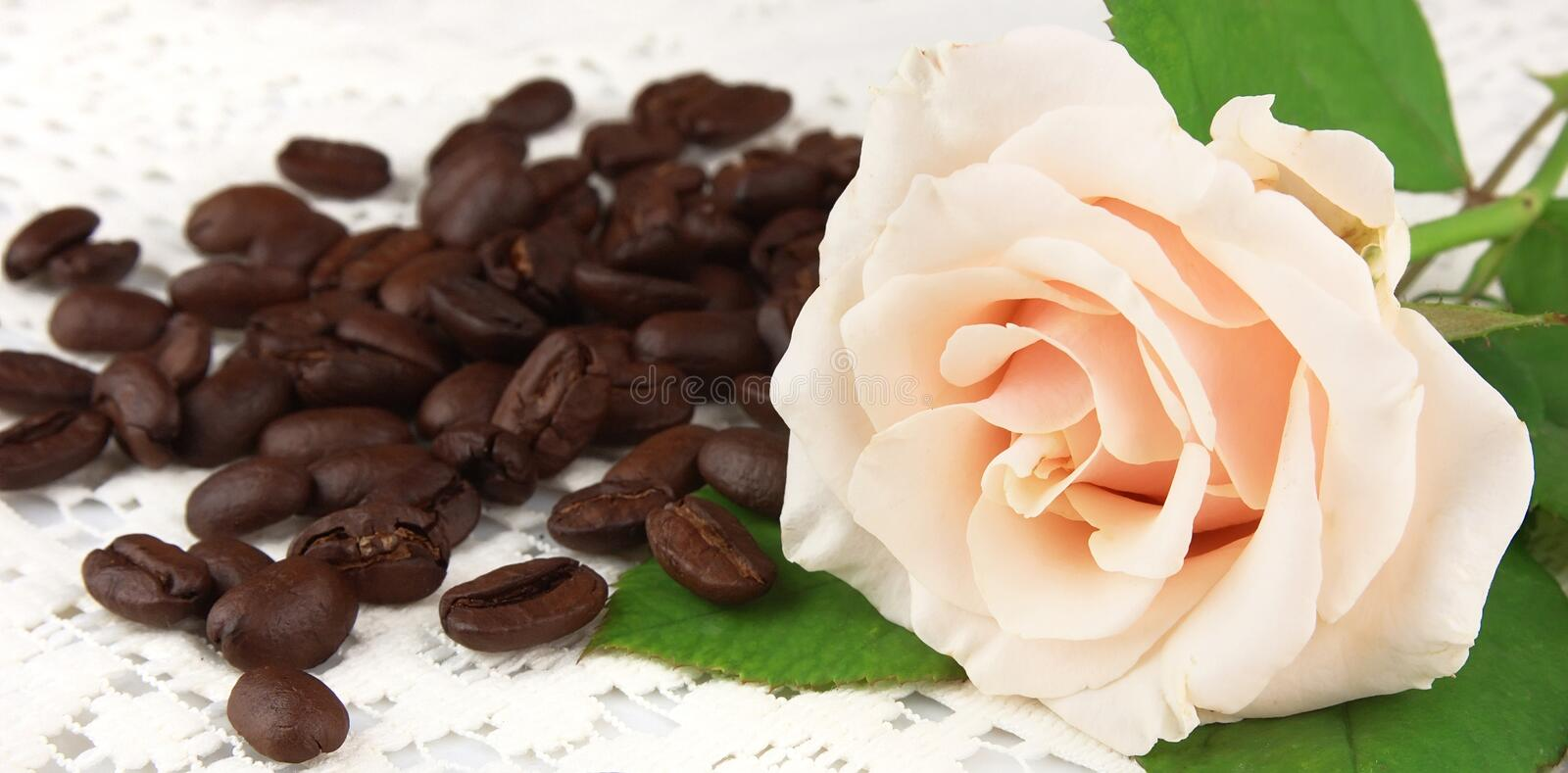 Grains of coffee with a white rose
