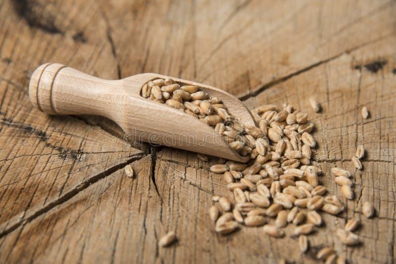 Grains de blé image stock