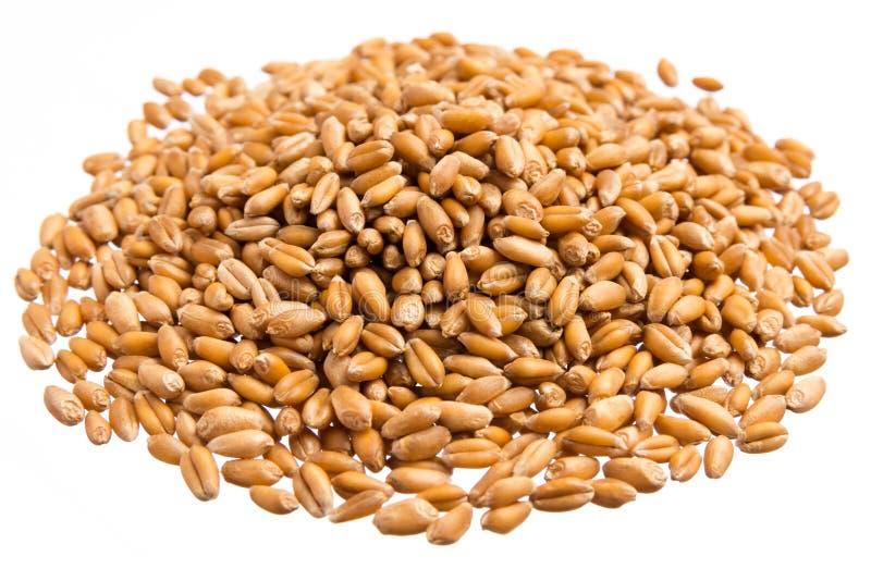 Grains de blé Pile des grains, fond blanc d'isolement photographie stock