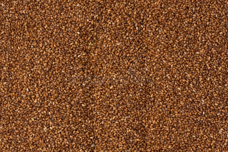 Grains de Brown Teff images stock