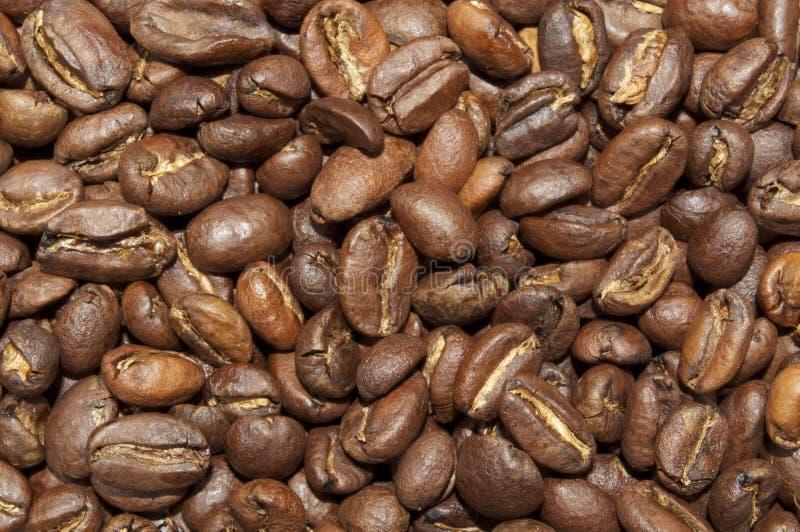 Grains de café éthiopiens de Yirgacheffe photographie stock
