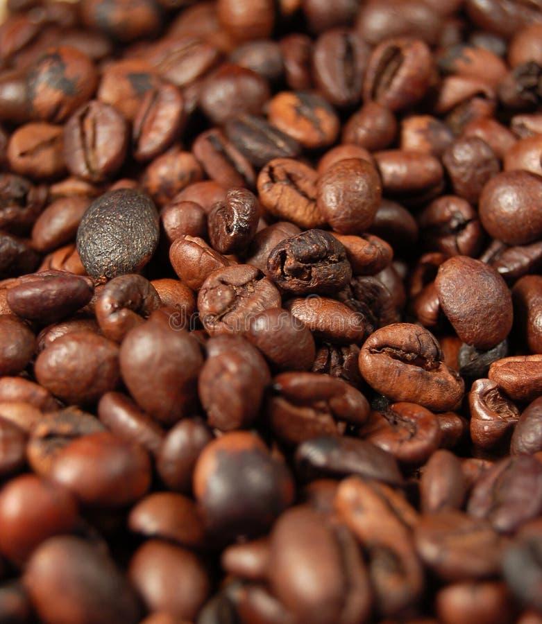 Grains de café 05 images stock