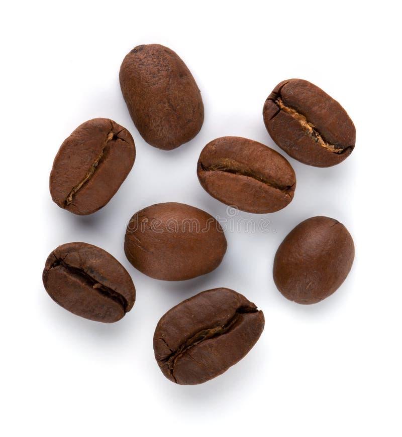 Grains de café photo libre de droits