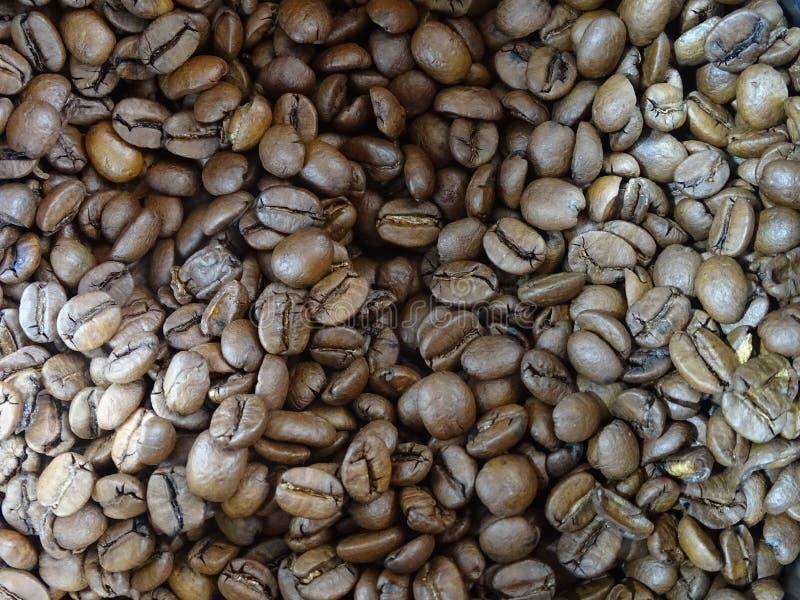Grains de café choisis image stock