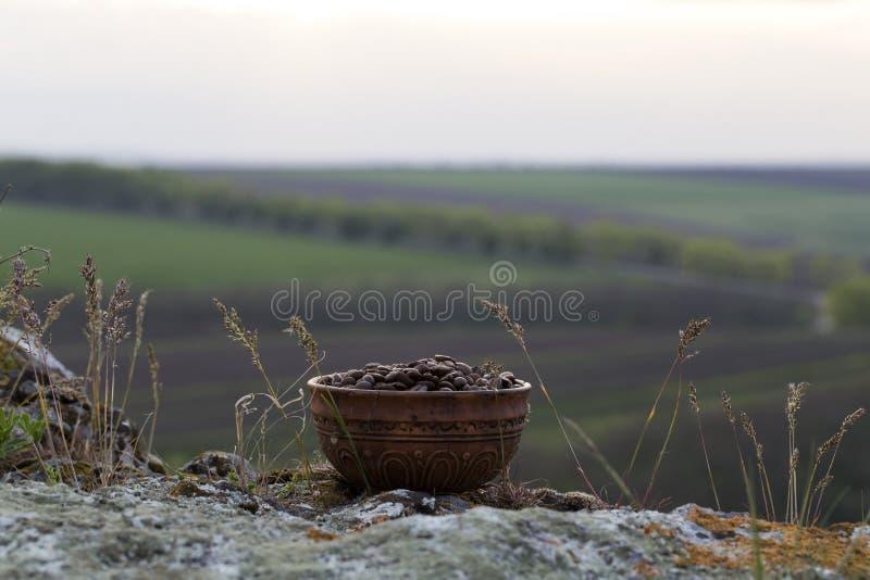 Grains de café dans la cuvette en céramique photo libre de droits