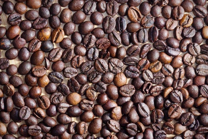 Grains de café dans une tasse photographie stock