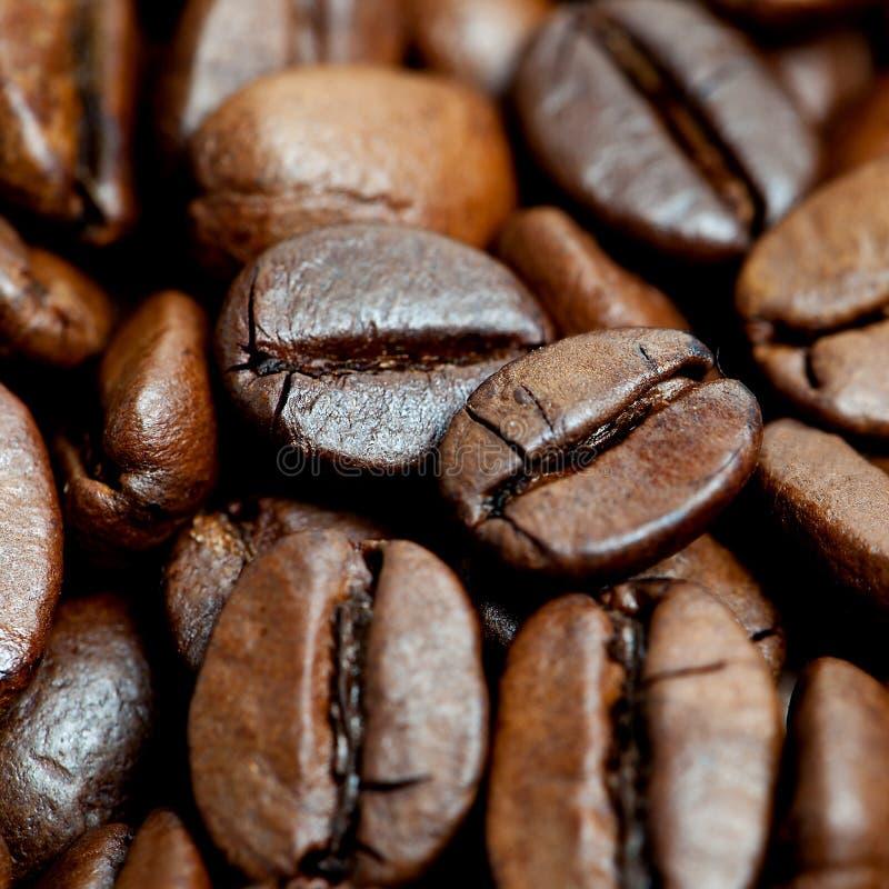Grains de café de Brown image stock