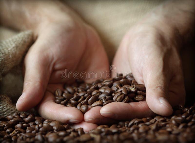 Grains de café de fixation de main photographie stock
