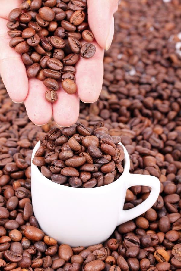 Grains de café disponibles image libre de droits