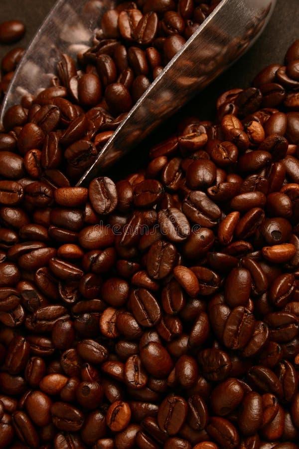 Grains de café et épuisette image stock
