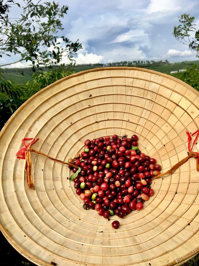 Grains de café et chapeau conique en feuille de palmier photos stock