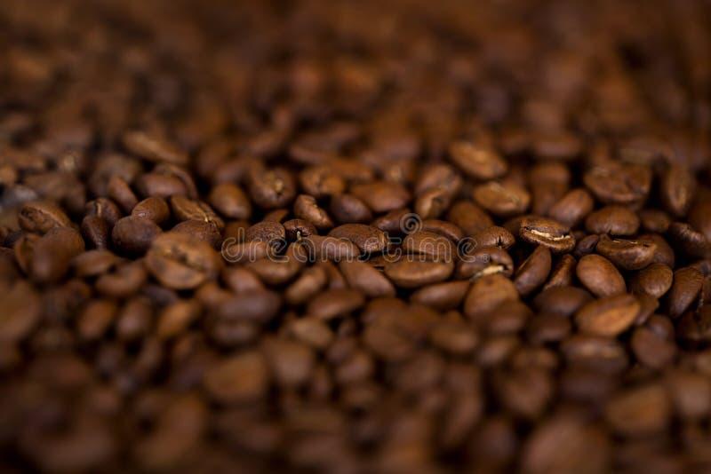 Grains de café frais en gros plan photo stock