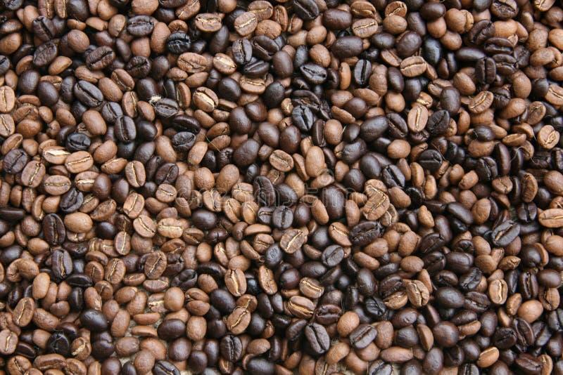 Grains de café mélangés photographie stock