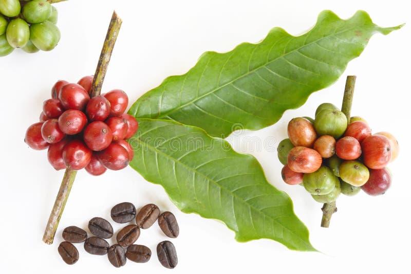 Grains de café mûrs photographie stock