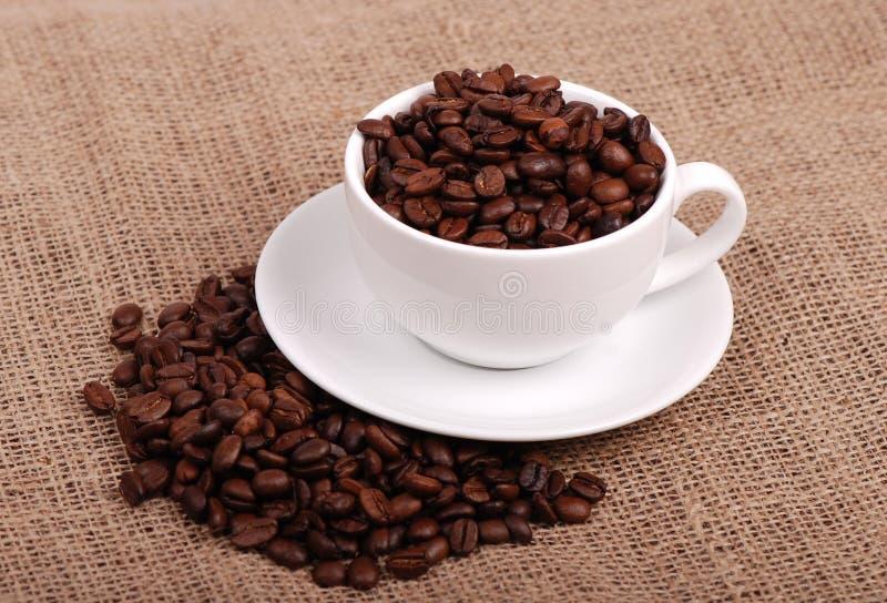 Grains de café normaux photos stock